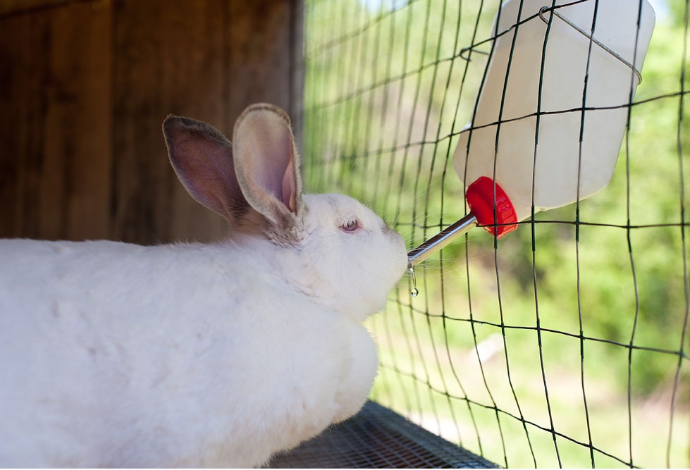 How to Choose the Best Rabbit Drinking Water Bottle